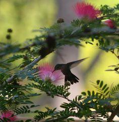 magical hummignbird