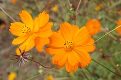 경부 3녹지 도시텃밭의 가을꽃