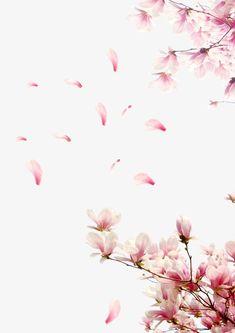 Flores cor - de - Rosa, pétalas de Flores, decoração de festas de Casamento pétalas CAEM as pétalas de Rosas., Peach Petal, Festival, Flores Imagem PNG