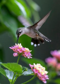 Pretty Birds, Beautiful Birds, Animals Beautiful, Baby Animals, Cute Animals, Hummingbird Pictures, Hummingbird Garden, Colorful Birds, Little Birds