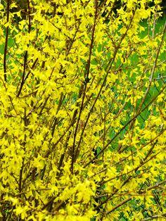 Gelb ist doch eine herrliche Farbe