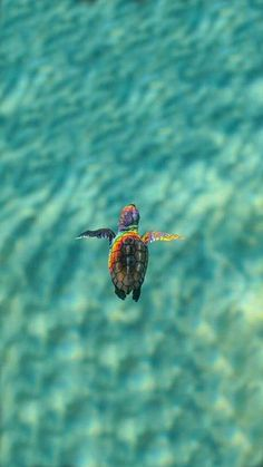Muero de amor I love the simple turtle as the subject but also the inclusion of the rainbow reflecting on the turtle is amazing Tier Wallpaper, Animal Wallpaper, Nature Wallpaper, Sea Turtle Wallpaper, Ocean Wallpaper, Glitter Wallpaper, Wallpaper Backgrounds, Baby Animals Pictures, Cute Animal Photos