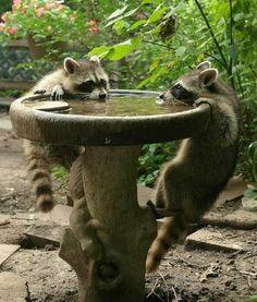 Thirsty bandits