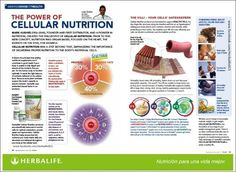 Cellular Nutrition is our core product