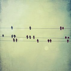 Photo print from Elgarboart. Birds on wires always remind me of musical notes.