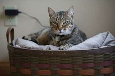 This ferocious feline has taken over this basket bed