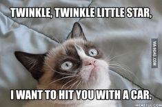 Gotta love that grumpy cat!