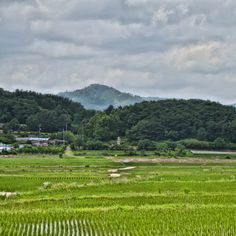 경주 낭산 Gyeongju, Vineyard, Mountains, Nature, Travel, Outdoor, Outdoors, Naturaleza, Viajes