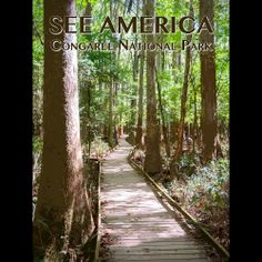 Congaree National Park by Zack Frank  #SeeAmerica