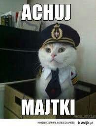 Polish Memes, Very Funny, Funny Animals, Haha, Thats Not My, Funny Memes, Kawaii, Entertaining, Cool Stuff