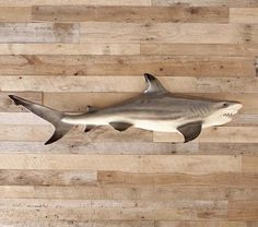 Shark Species Sharks Shark Shark Room Shark Bedroom