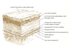 Sheet mulch can be as simple as a layer of newspapers topped by 8 to 12 inches o. Sheet mulch can Permaculture Design, Organic Gardening, Gardening Tips, Urban Gardening, Compost Soil, Composting, Compost Tea, Sheet Mulching, Weed Seeds