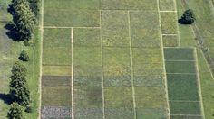 Contaminación: Park Grass Experiment, el estudio científico que lleva en marcha 159 años. Noticias de Tecnología. El proyecto Park Grass Experiment estudia la biodiversidad de los pastizales desde 1856 y ha permitido observar la evolución de estos pastizales según la presencia de nitrógeno en el suelo
