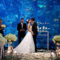 10 Incredibly Unique Wedding Ceremony Ideas: Under The Sea. Courtesy of Seattle Aquarium Events Wedding Ceremony Ideas, Budget Wedding, Wedding Events, Wedding Planner, Wedding Photos, Wedding Reception, Weddings On A Budget, Inexpensive Wedding Venues, Wedding Parties
