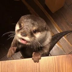 Sea Puppers asks for a piece of egg.