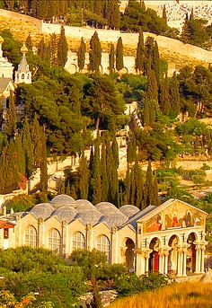 I wanted to sit and stroll for days...  Church of All Nations, Garden of Gethsemane, Israel