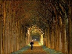Tree Tunnel, The Netherlands.