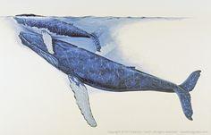 whales illustrations - Cerca con Google