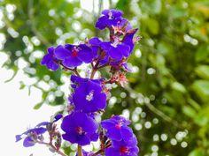 Flores 6 | por osoriotrujillo