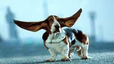 7 Razones Para No Cortar La Cola y Las Orejas a Los Perros…léelo aqui  http://soloparatiradio.com/?p=6126  - #mascotas #pets @soloparati radio