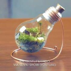 The creation of living art, a lightbulb terrarium! Light Bulb Jar, Light Bulb Terrarium, Hanging Light Bulbs, Terrarium Diy, Recycled Light Bulbs, Light Bulb Crafts, Bottle Garden, Ideias Diy, Diy Pillows