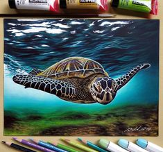 Drawings Spanning Many Different Subjects. Click the image, for more art from David Dias. Colored Pencil Artwork, Color Pencil Art, Pencil Drawings Of Animals, Sea Turtle Art, Turtle Painting, Indian Art Paintings, Creative Art, New Art, Painting & Drawing