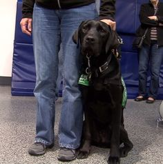 Guide dogs practiced boarding an airplane and maneuvering through the cabin Saturday in Portland.