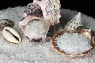 Sea Salt with shells