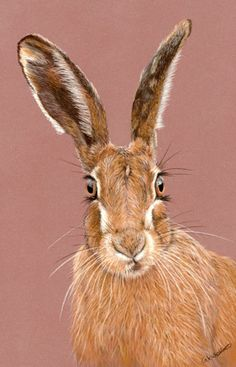 Bewitched - Hare portrait
