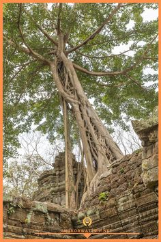 Ancient Khmer architecture,Ta Prohm temple ruins hidden in jungle in Siem Reap, Cambodia. Ta Prohm is a jungle temple in Angkor. Jungle Temple, Ta Prohm, Temple Ruins, Siem Reap, Angkor Wat, How Beautiful, Cambodia, Spirituality, Architecture