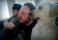This dog who decided he could definitely handle Paranormal Activity 4 without getting nightmares.