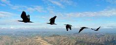 Zugvögel (dpa)