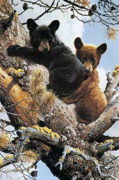 Bear cubs in a tree - painting by Carl Brenders