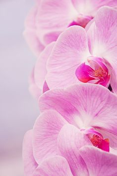 Pink Orchid - wall prints to order - surround around tays bday canvas art gift
