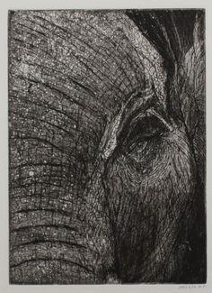 "The ""lines"" on this elephant etch are telling stories - amazing..."