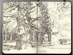 Ian Sidaway Fine Line: Winter Oaks