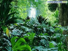 Forêts - notre-planete.info