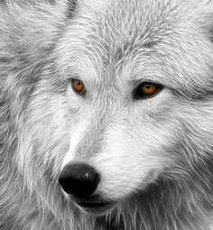 Ideas Tattoo Wolf Beautiful Wolves Art For 2019 Wolf Tattoos, Nature Tattoos, Animal Tattoos, Lion Tattoo, Beautiful Wolves, Animals Beautiful, Cute Animals, Pretty Animals, Animal Drawings
