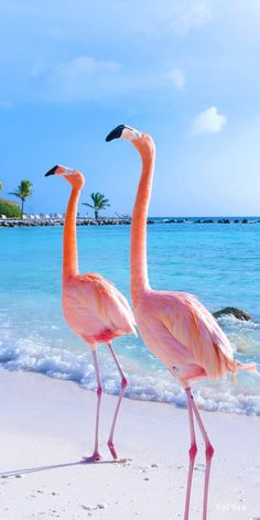 Visit Renaissance Aruba Private Island to mingle with flamingos on Flamingo Beach and get social media-worthy selfies with these pink feathered friends. Flamingo Wallpaper, Flamingo Art, Summer Wallpaper, Animal Wallpaper, Pink Flamingos, Beach Wallpaper, Holiday Photography, Nature Photography, Wild Animals Photography