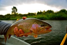 Doesn't get any better than that. For more fly fishing info follow and subscribe www.theflyreelguide.com. Also check out the original pinners site and support