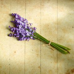I was thinking, your wedding is bluebell time of year. Bluebell bouquet??