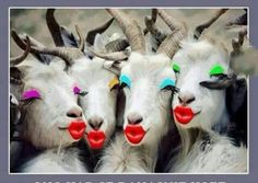 This is how Muslims view goats