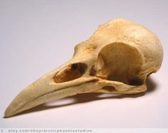 Bird Skull Crow Resin Replica- Corvus brachyrhynchos- natural patina