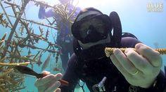 Florida Coral Farming | JONATHAN BIRD'S BLUE WORLD