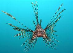 Super cool! Ook gezien de koraalduivel