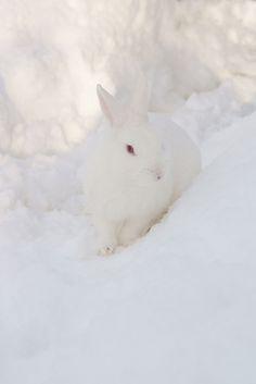 Love, love, love bunnies ~