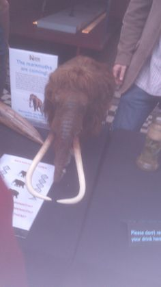 Twitter / strangemouse82: If we clone mammoths they should ...