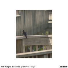 Red Winged Blackbird Wood Poster
