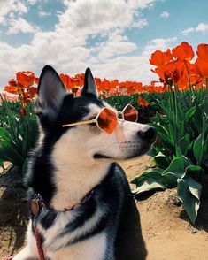 10 fun summer activities and holiday ideas for you and your dog - Tiere Bilder - Hunde Cute Funny Animals, Cute Baby Animals, Funny Dogs, Animals And Pets, Cute Dogs And Puppies, I Love Dogs, Doggies, Hot Dogs, Dog Wallpaper