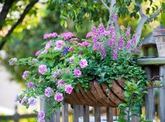 A window box adds living personality to your home. Sun or shade, there is a combo that will suit your setting and style. Window Box Flowers, Flower Boxes, Flower Basket, Ways To Save Water, Short Plants, Window Planter Boxes, Window Plants, Pot Jardin, Porche